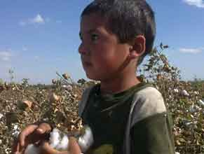 A child picks cotton in Uzbekistan, part of the government's forced labor system. Photo: Cotton Campaign