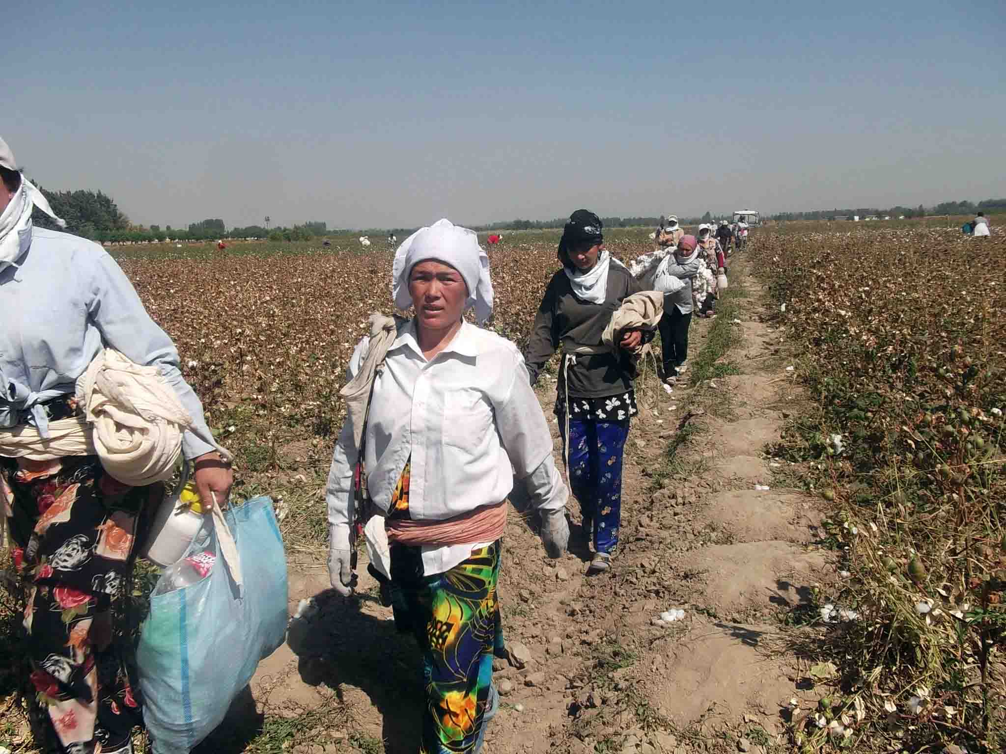 Uzbekistan, forced labor, cotton harvest, human rights, Solidarity Center