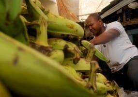 ,Amparo Lara sells his plantains in the Municipal Market of San Cristobal,