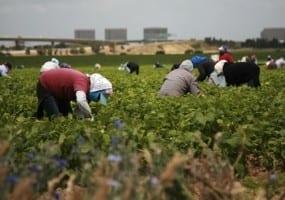 Mexico.farmworkers.3.15.shutterstock_54017278