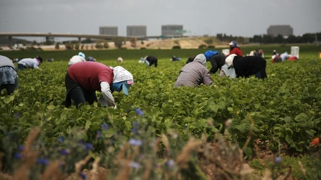Mexico farmworkers
