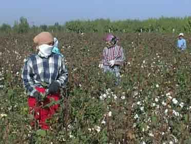 forced labor, Uzbekistan, cotton harvest, Solidarity Center