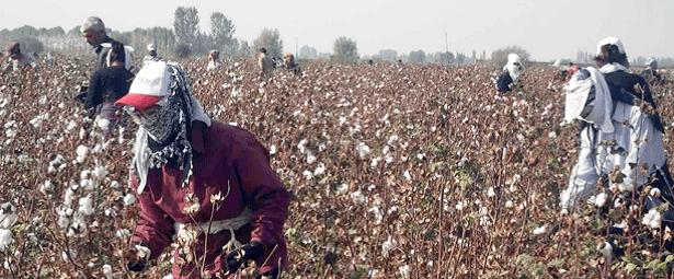 Uzbekistan, forced labor, cotton, violence