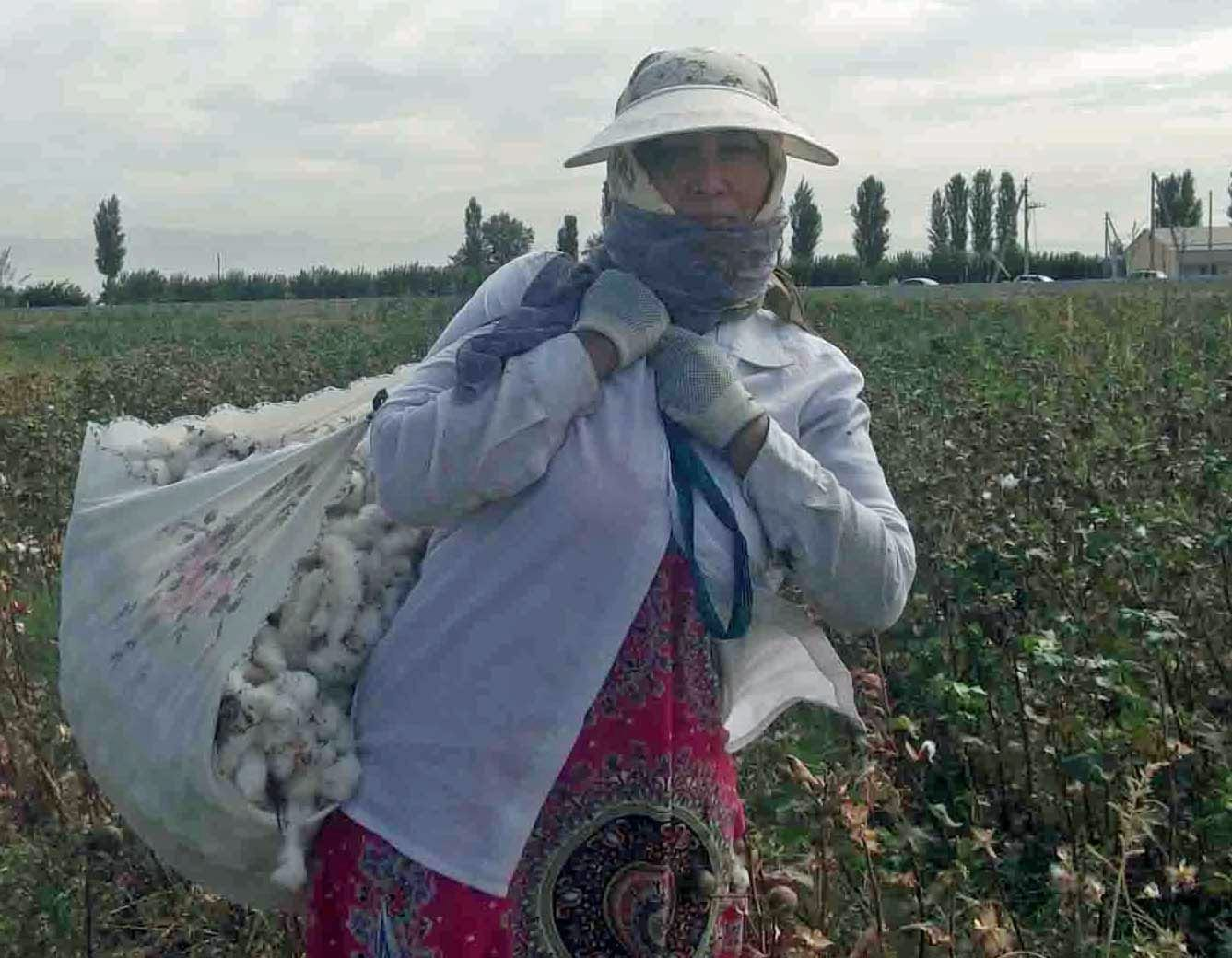 Tashkent, Uzbekistan, cotton picking, forced labor, unions, Solidarity Center