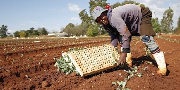 South Africa, cabbage farmers, unions, Solidarity Center