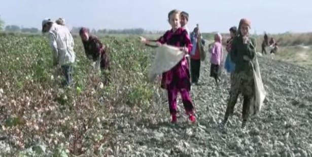 Uzbekistan, cotton harvest, forced labor, Solidarity Center