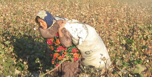 Uzbekistan, cotton harvest, forced labor, Solidarity Center