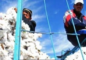 Uzbekistan, cotton harvest, Solidarity Center, forced labor