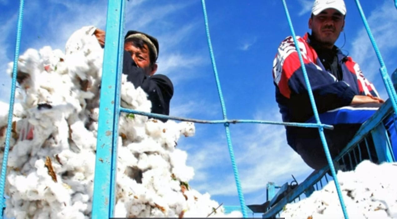 Uzbekistan, cotton harvest, Solidarity Center, forced labor