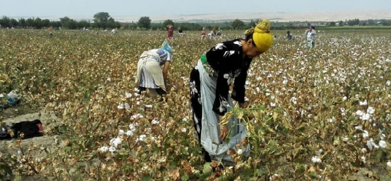 Uzbekistan, cotton, human rights, forced labor, Solidarity Center