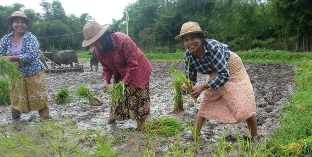 Myanmar, rice farmers, Solidarity Center, worker rights