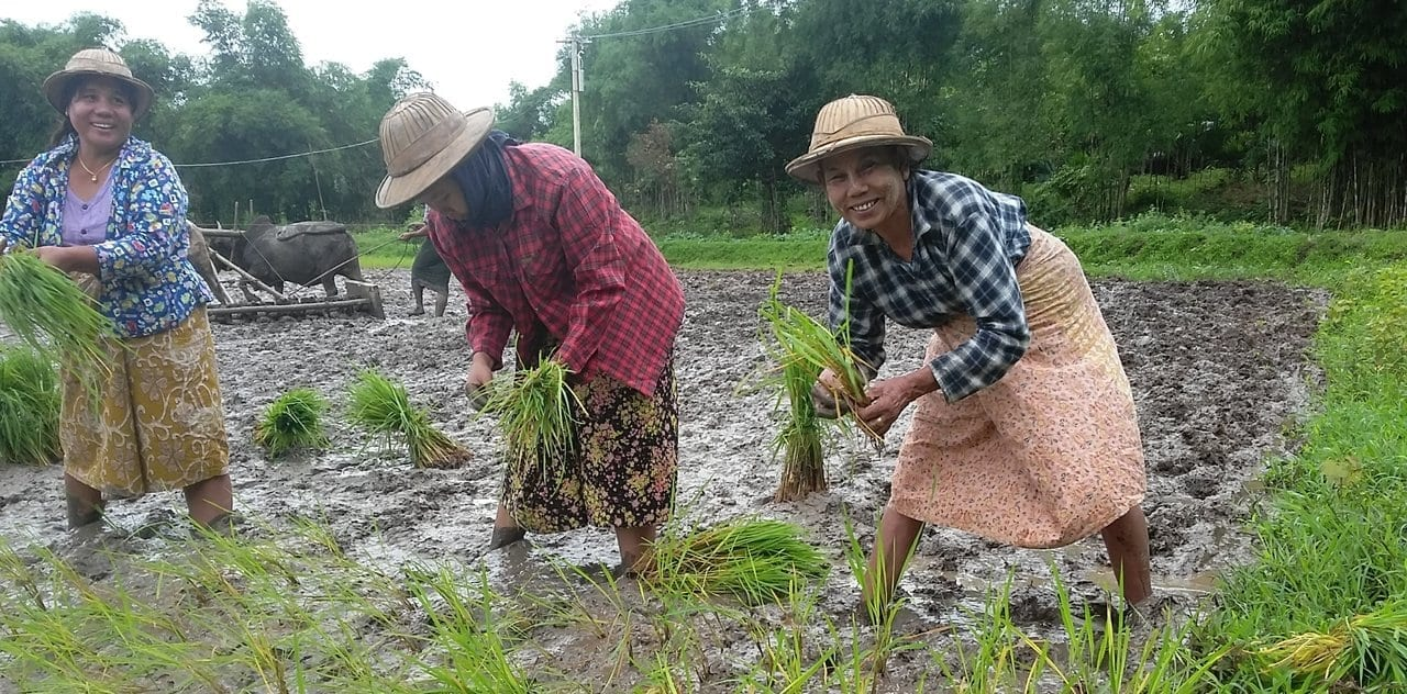 Farmers Form Unions across Myanmar to Save Their Land