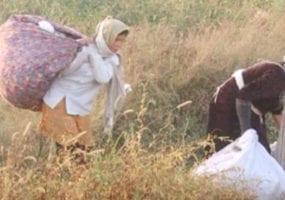 Uzbekistan, cotton harvest, forced labor, human rights, Solidarity Center