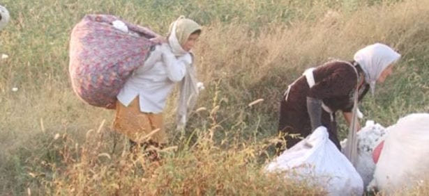 Uzbekistan, cotton harvest, forced labor, human rights, Solidarity Center