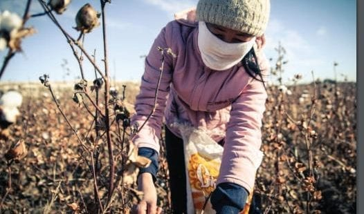 Uzbekistan, forced labor, cotton, Solidarity Center