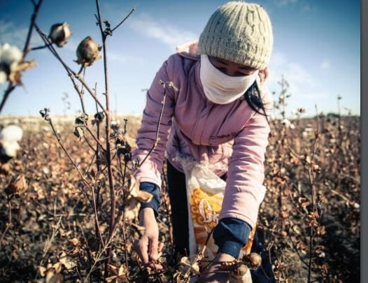 Report Links World Bank to Uzbekistan Forced Labor