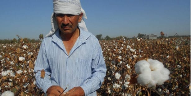 Uzbekistan, cotton harvest, forced labor, Solidarity Center, human rights
