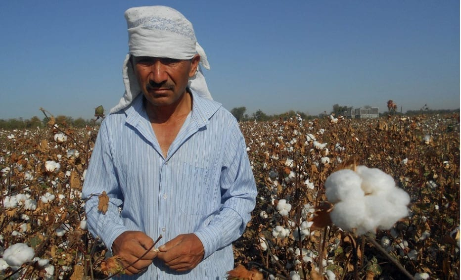 Child Labor Returns to Uzbekistan's Cotton Fields