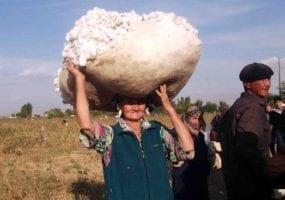 Uzbekistan, cotton harvest, forced labor, child labor, human rights, Solidarity Center