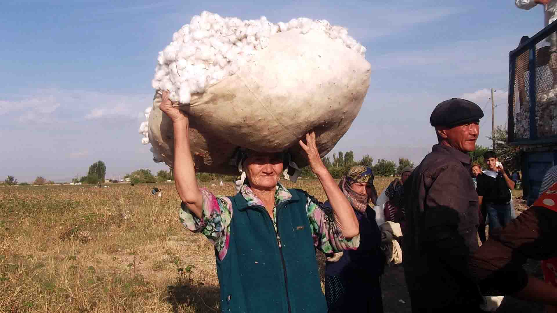Uzbekistan, cotton harvest, forced labor, child labor, human rights, Solidarity Center