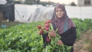 Solidarity Center, Gaza, worker rights, agricultural worker, Palestine, farmworker