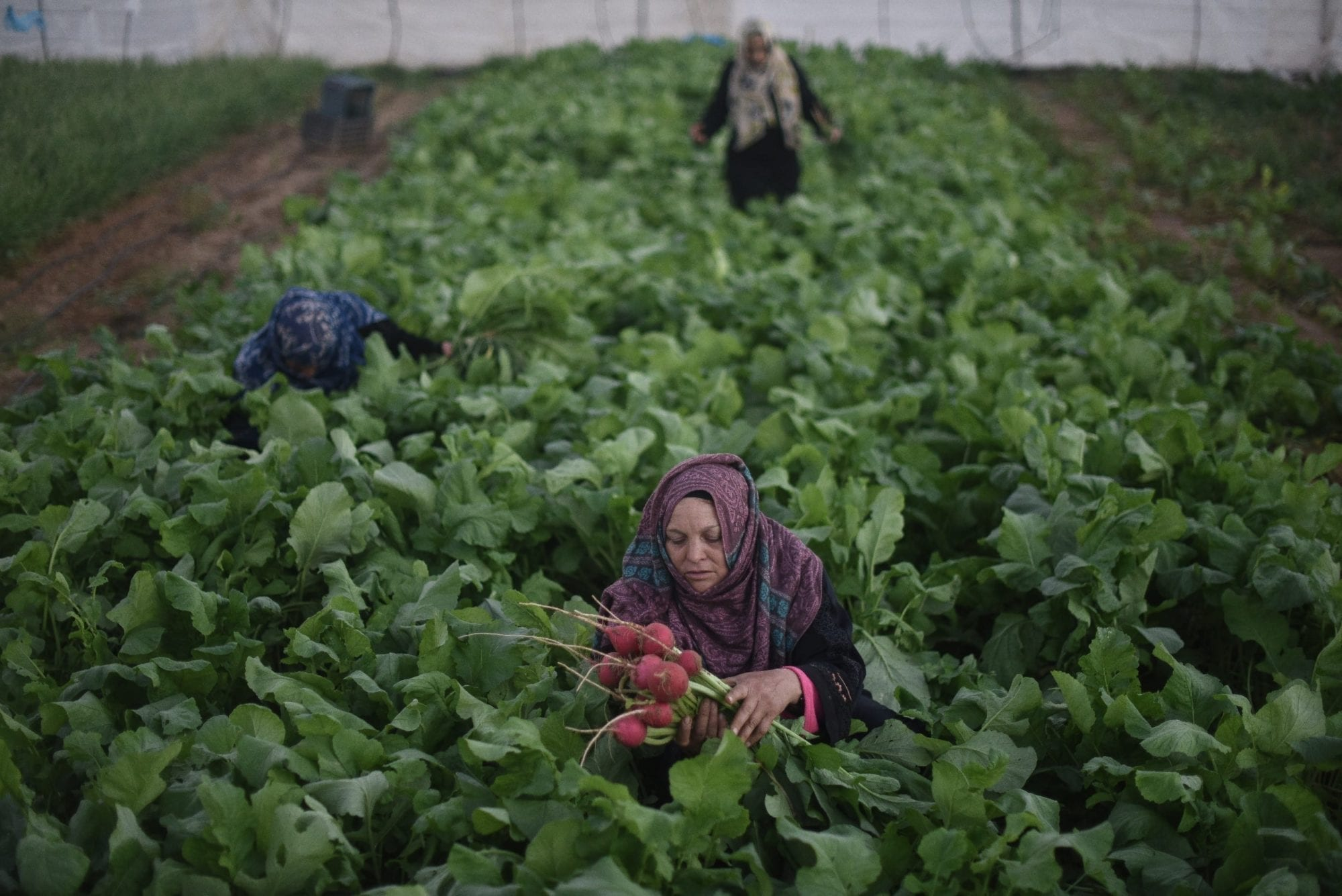 Gaza, Solidarity Center, worker rights, Palestine, farmworker, agricultural worker