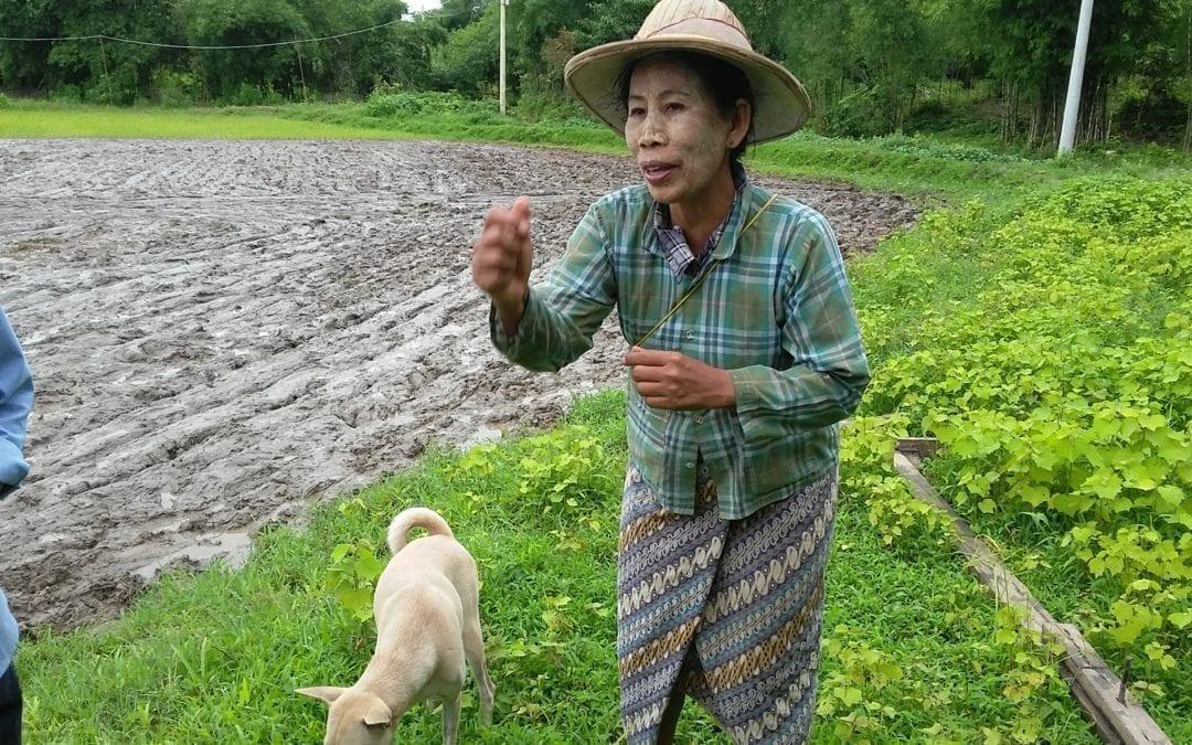 Burmese Rice Farmer: With a Union, We Improve Our Livelihood