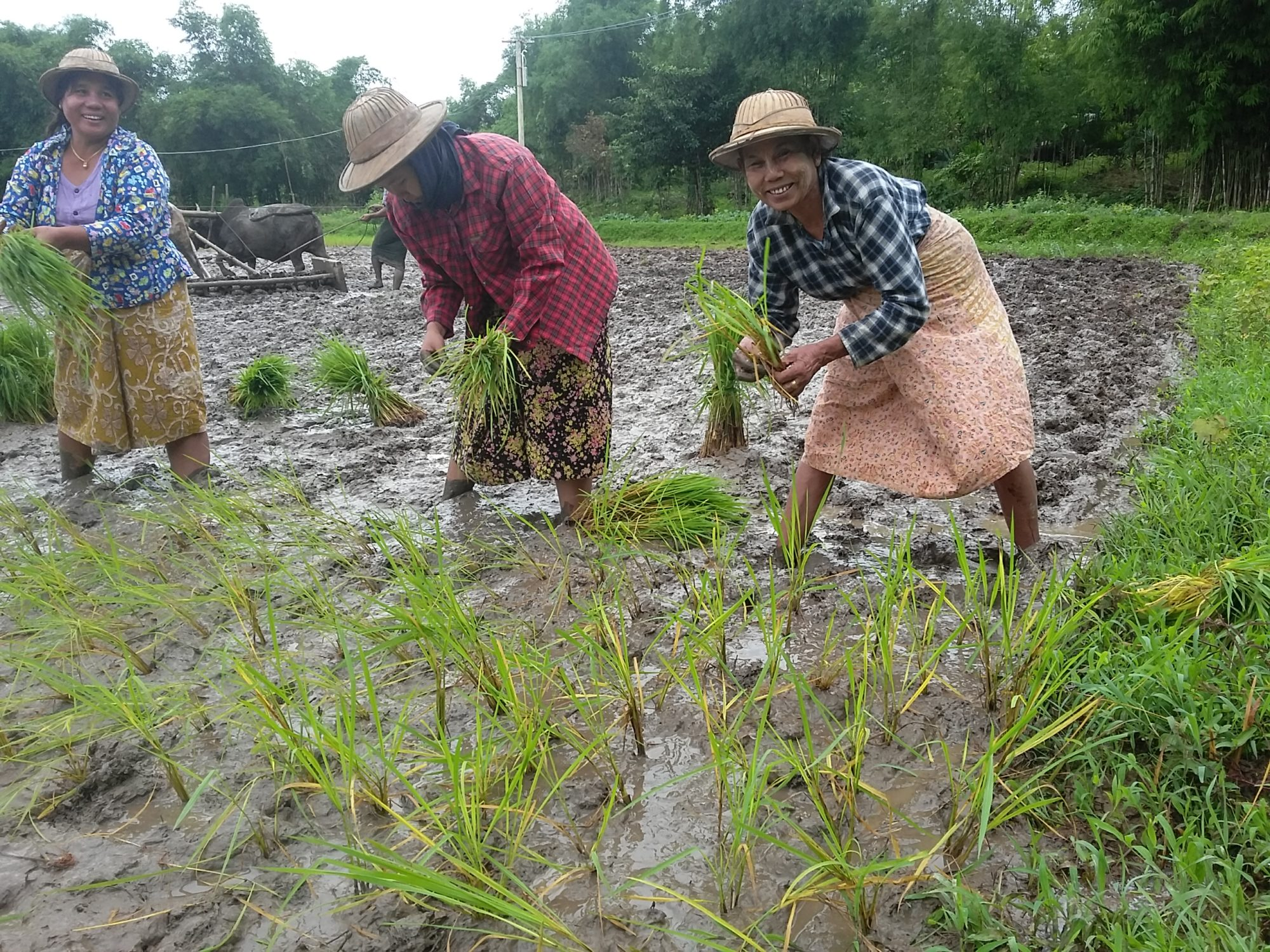 Myanmar, rice farmers, worker rights, Solidarity Center