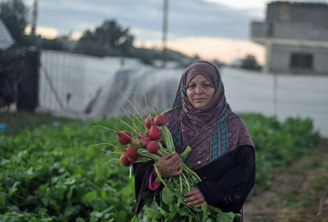 Palestine, worker rights, agricultural workers, Solidarity Center