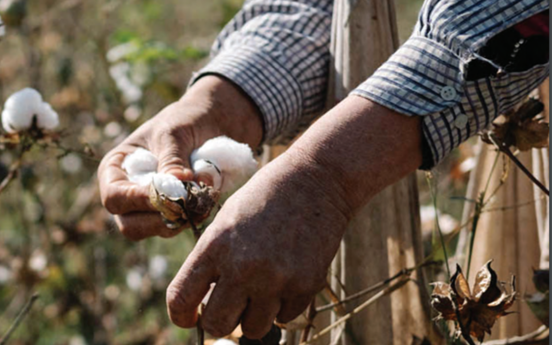 A man picking cotton in an Uzbek Forum for Human Rights and Cotton Campaign report on forced labor in Uzbekistan, produced with Solidarity Center support