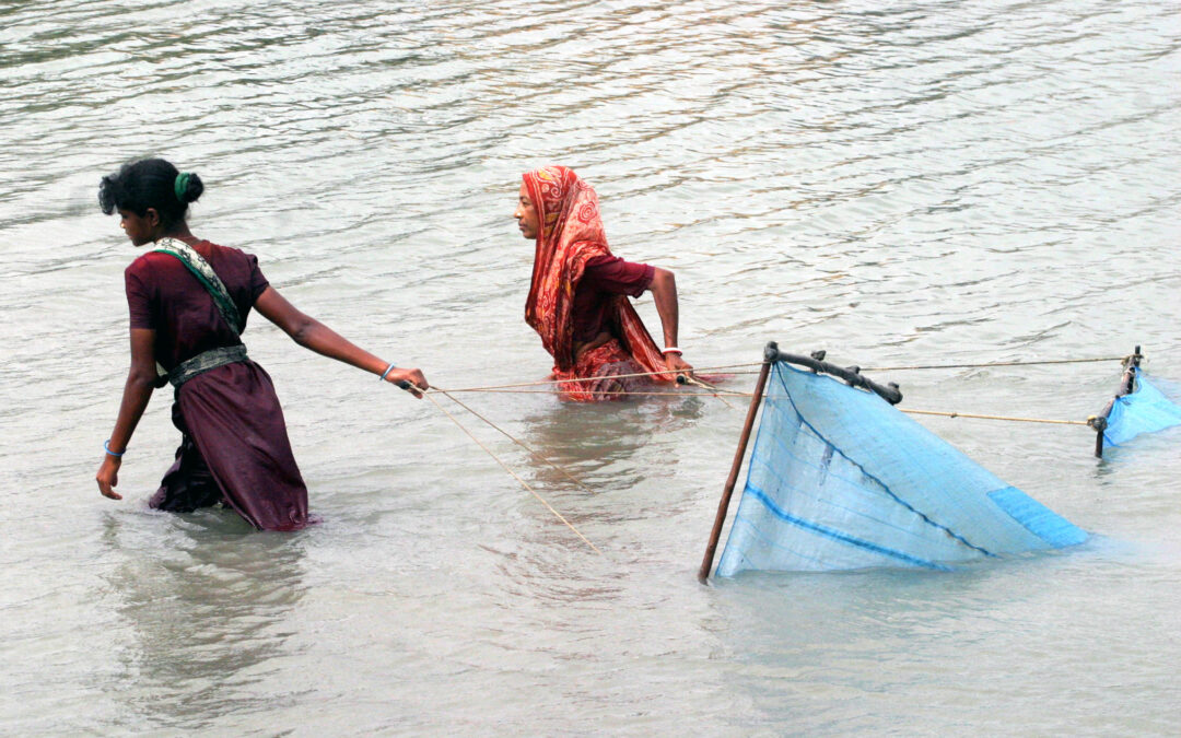 Bangladesh women catch shrimp with nets