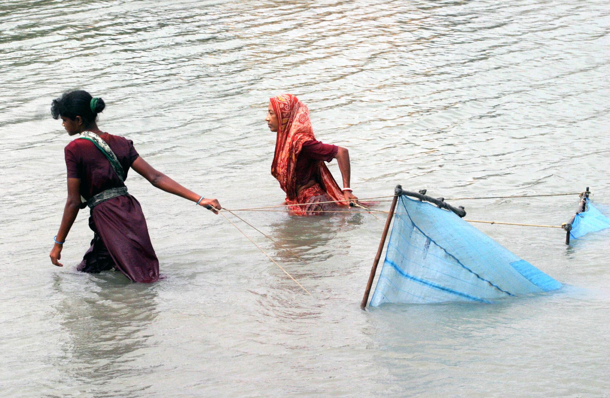 Bangladesh women catch shrimp with nets