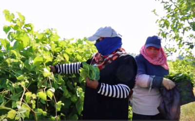 Jordan, agricultural workers win rights at work, gender-based violence at work, worker rights, Solidarity Center